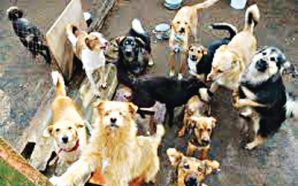 149 dogs rescued before being boiled into soup