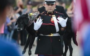 Marine dog with bone cancer says final goodbye