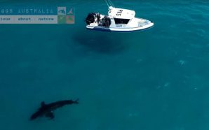 18ft great white shark spotted off popular beach
