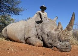 Sudan, The World's Last Male Northern White Rhino, Has Died