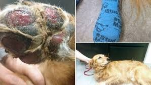 Vet issues 'Summer Walking Warning' after treating dog with burned…