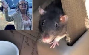 This Woman Was Living In Her Van With 300 Rats!