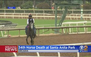 37th horse dies at Santa Anita Park after sustaining leg…