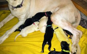 Wow! A Lime Green Puppy Has Been Born. One Of…