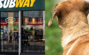 Hungry stray dog 'Sally' visits Subway 'every night for a…