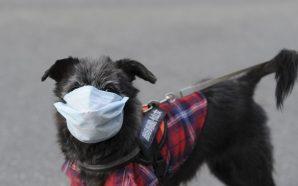 A Dog Has Now Tested Positive For Coronavirus
